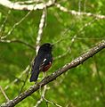 Many Types of birds that can be seen from the New River Trail. (27614123731).jpg