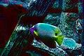 Marine fish (5791790472).jpg