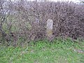 Markers in the hedge - geograph.org.uk - 2306326.jpg
