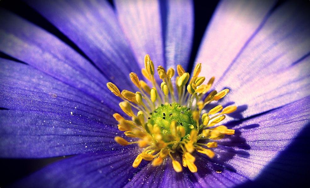 «Amour et les fleurs ne durent qu'un printemps.» de Pierre de Ronsard  www.steve-c-foto.fr/