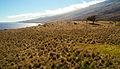 Maui (15623079700).jpg