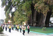 העץ הרחב בעולם באואחאקה, מקסיקו ויקיפדיה האינצקלופדיה החופשית