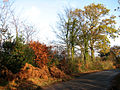 Mid-November sunshine - geograph.org.uk - 615749.jpg