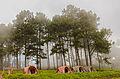 Misty Morning at Doi Angkhang Mountain, Chiangmai, Thailand.jpg