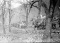 Mit den Geschützen auf einem schmalen Waldweg - CH-BAR - 3239291.tif