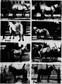 Modern horse management (microform) (1914) (20465263949).jpg