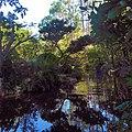 Morikami Museum View of Grounds Waterview.jpg