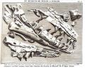 Mosasaurus Teylers Museum - Faujas de Saint-Fond.png