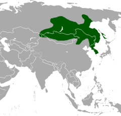 Moschus moschiferus map.png