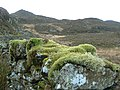 Moss and Lichen - geograph.org.uk - 326029.jpg
