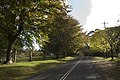Mount Wilson NSW 2786, Australia - panoramio (59).jpg