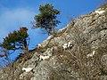 Mountain goats, Burrington Coombe - geograph.org.uk - 1671561.jpg