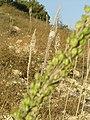 Mt Zion Drimia 614.jpg