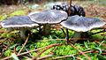 Mushroom Trees.JPG