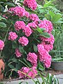 NJ LBI Flowers 02.JPG