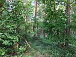 Nature-reserve-streitmoor-germany wdpa-82656 002 2018-05-10 07-28-40.jpg