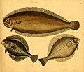 Naturgeschichte in Bildern mit erläuterndem Text (Taf. L) (6059212344).jpg