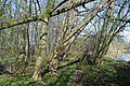 Naturschutzgebiet Haseder Busch - Im Haseder Busch (35).jpg