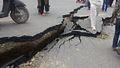 Nepal Earthquake 2015 06.jpg