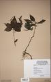 Neuchatel Herbarium Types NEU000113008.tif