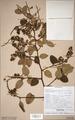 Neuchatel Herbarium Types NEU000113062.tif
