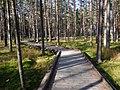 Nowy Targ rezerwat Bór na Czerwonem - panoramio.jpg