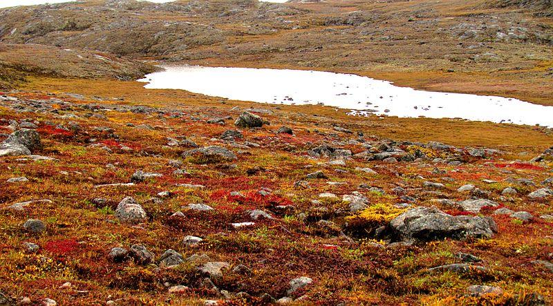 File:Nunavut tundra -a.jpg