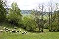 Oberägeri - panoramio (14).jpg