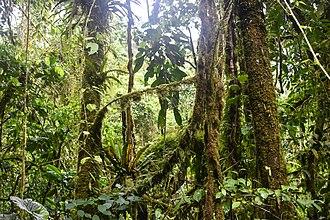 Parque Natural Obô de São Tomé - Image: Obo National Park 2