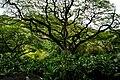 Odd Tree (5217061108).jpg