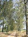 Okolice Latowicza - panoramio.jpg