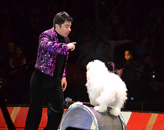 America's Got Talent (season 7) - Image: Olate dogs on wheel