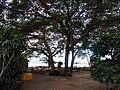 Old Bagan, Myanmar (Burma) - panoramio (6).jpg