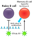 Original antigenic sin.svg