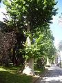 Orto botanico di Napoli 206.JPG