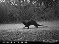 Otter (6492409583).jpg