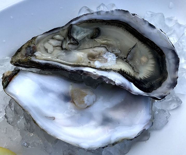 File:Oyster on ice.jpg