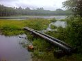 Pachaug Trail - Wiclcabouet Marsh, Voluntown, CT.jpg
