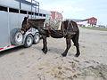 Pack mule 4.JPG