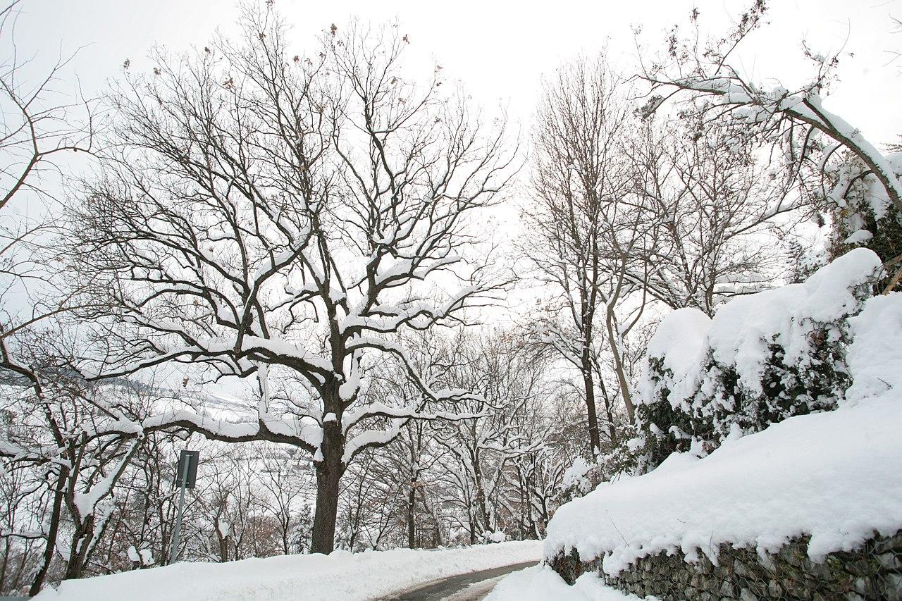 File paesaggio invernale jpg wikipedia for Disegni paesaggio invernale