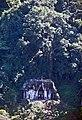 Palenque-28-Blattkreuztempel-1980-gje.jpg
