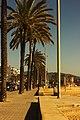 Palm Trees on Street, Badalona (32545250813).jpg