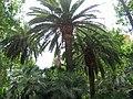 Palmy - panoramio (2).jpg