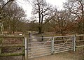 Part of Thorndon Country Park - geograph.org.uk - 1743864.jpg