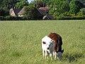 Pasture, Boxford - geograph.org.uk - 1790984.jpg