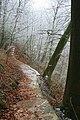 Path Through a Frosty Hinkley Wood - geograph.org.uk - 1112710.jpg