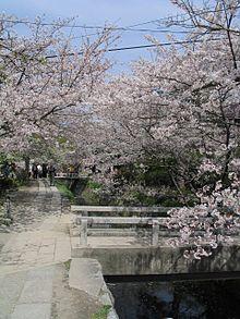 Cherry blossoms 01 - 2 part 6