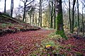 Path through Ramshaw Wood, Martyrs Hill, Buittle.jpg