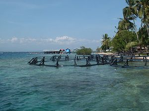 Photo of three circular metal cages in shallows, with docks, boathouses and palm trees in background