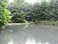 Perch at the WWT London Wetland Centre - geograph.org.uk - 1446536.jpg
